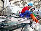 Работа в Дании на рыбзавод