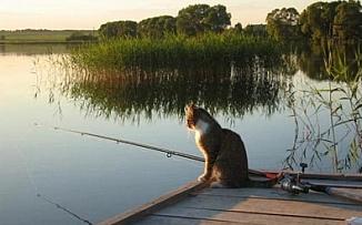 День рыбака - ловим, жарим, парим, рассказываем байки!
