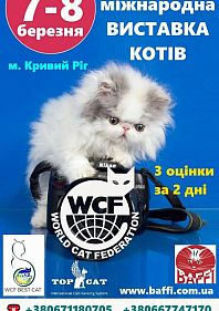 Междунарожная выставка кошек