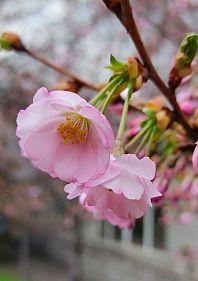 Сезон цвітіння в ботаничному саду