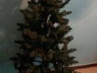 Новогодняя искусственная ёлка - 155 см.