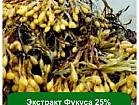 Экстракт Фукуса 25%, 1 кг