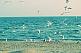 отдых у моря по доступным ценам
