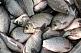 Продам свежемороженую  рыбу. Вылов  –  январь 2020г. (вся икряная) .Тарань, лещ, подлещ. Опт. Отвеча