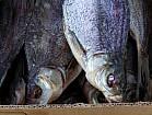 Продам вяленую рыбу в ассортименте. Тарань, Лещ, мелкий лещ, густера, судак, окунь, карась, толстоло