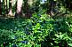 Финляндия сбор лесных ягод