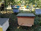 Продам пчел.
