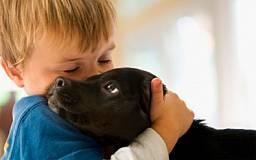 Депутаты введут наказание за издевательство над животными