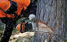 В Кривом Роге браконьеры срубили дубовую рощу