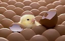20 стран мира будут есть украинские яйца