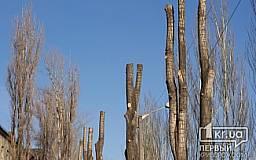 Обрезка одного дерева обойдется криворожанам в 1500 гривен