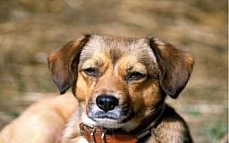 В 30 км от Кривого Рога застрелился мужчина, целясь в собаку