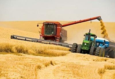 Картинки по запросу Урожай зерна бьет рекорды:
