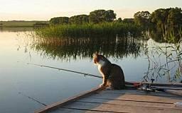 В Днепропетровской области рыбаков-браконьеров будут ловить с самолета