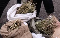 В Кривом Роге в домовладении милиция изъяла 10 килограмм «маковой соломки»