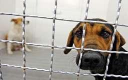 В Кривом Роге построят приют для бездомных животных