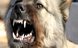 В Днепропетровской области бешеная собака напала на своих хозяев