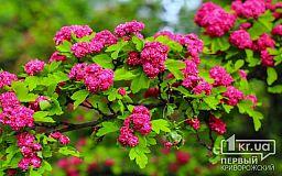 У Дніпропетровській області оголошено весняний конкурс
