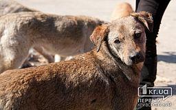 Криворожские коммунальщики не убирают мертвых собак с улиц (ФОТО 18+)