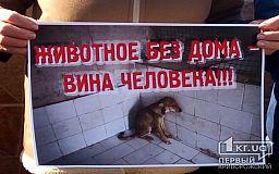 «В Кривом Роге власть не хочет решать проблему бездомных животных», - зоозащитница