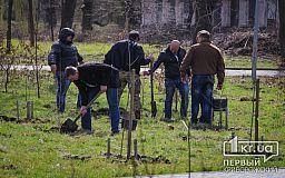 Криворожане высадили деревья в память o погибших в зоне АТО земляках