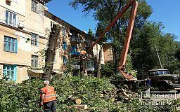 Под видом омоложения деревьев в Кривом Роге занимаются незаконной вырубкой, - свидетели событий