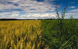 В Криворожском районе спасатели проверили состояние зерновых полей