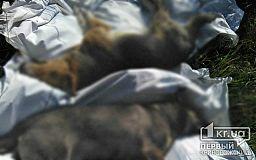 (Фото 18+) Неизвестные потравили бездомных собак в Кривом Роге