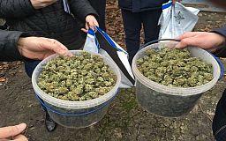 Криворожанин хранил в дамской сумке гранаты, а 1,5 кг каннабиса - в ведрах