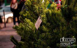 В Кривом Роге активно продают Christmas trees