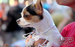 Народные приметы: как провести Год Желтой Земляной Собаки счастливо и благополучно