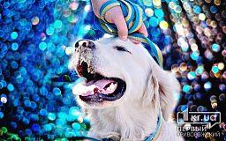 Астропрогноз на 2018 год. Что подготовила земляная Собака для жителей Кривого Рога