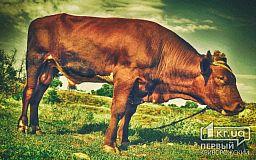 Внимание! Под Кривым Рогом воруют скот