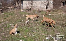 Волонтеры подсчитают сколько в Кривом Роге бездомных животных