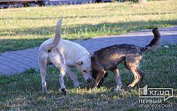 В Кривом Роге создадут Центр обращения с животными