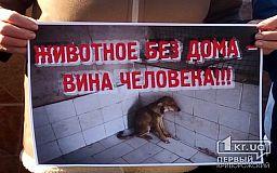 В Кривом Роге почти 7 тысяч бездомных собак