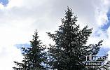 Погода у Кривому Розі на 26 лютого