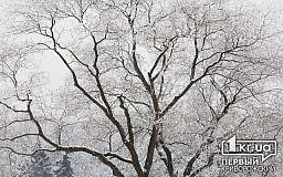Погода у Кривому Розі на 2 лютого