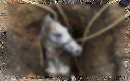 В Кривом Роге в канализационный колодец провалилась лошадь (ОБНОВЛЕНО)