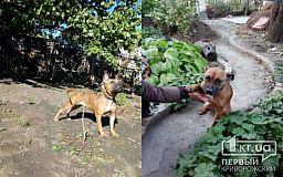 Едва не умершая от голода породистая собака ищет дом