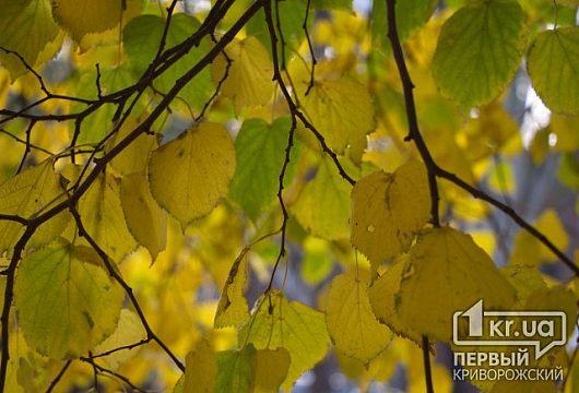 Погода в Кривом Роге на 23 октября