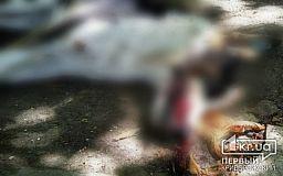 (Фото 18+) Весь тротуар в собачьей крови. В Кривом Роге потравили бездомных животных