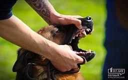 Особенности возмещения вреда, причиненного нападением собак, - советы юристов Кривого Рога