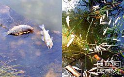 В Кривом Роге всплыла «пузом кверху» рыба в реке
