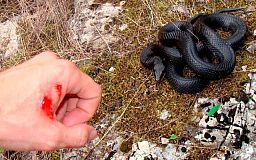 Криворіжцям слід бути обережними, почастішали випадки укусів зміями