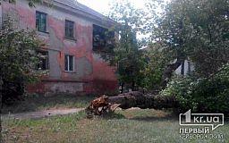 В Кривом Роге возле жилого дома упало трухлявое дерево