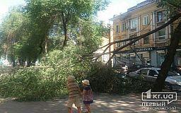 Неподалеку от ЗАГСа в Кривом Роге рухнула огромная ветка