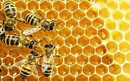 Ви знали, що сьогодні свято бджіл, яблук і меду..?