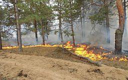 На Днепропетровщине сгорели гектары леса