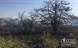 Криворізькі рятувальники розповіли чому небезпечно спалювати траву